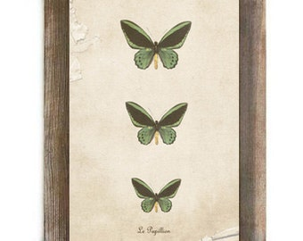 Antique Green and Black Butterflies Digital Download Art French