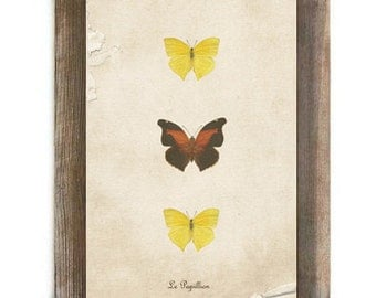 Antique Yellow and Brown Butterflies Digital Download File