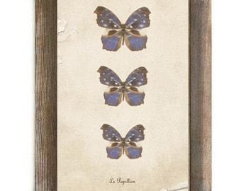 Le Papillion Antique Blue and Brown Butterflies Digital Download Print