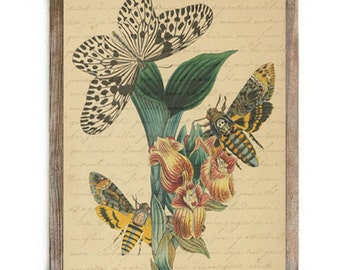 Antique Illustration Art Butterfly and Bee with French Script Love Letter Digital Download