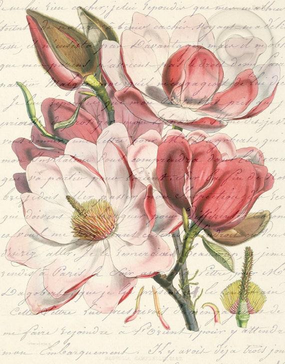 Antiqued Pink Magnolia Flower Digital Image Download Art Botanical Vintage Print French Script