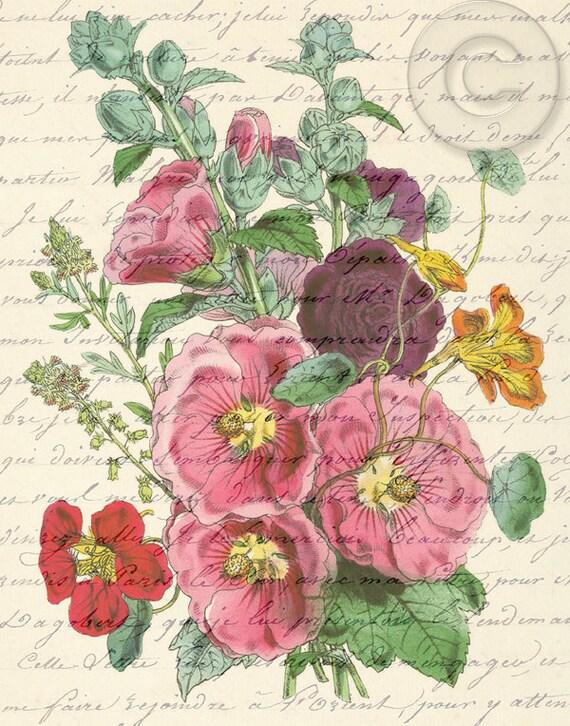 Antiqued Vintage Pink Hollyhock Flower Digital Download Print Botanical Art French Script