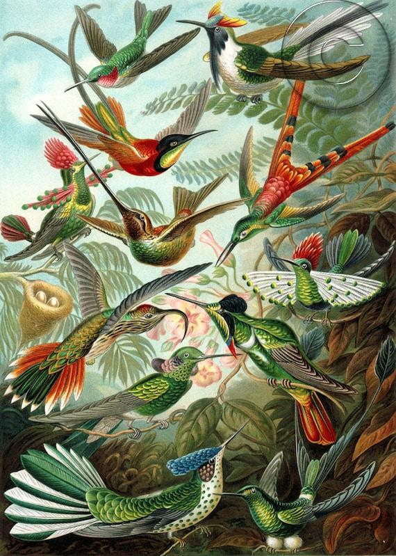 Tropical Colorful Antique Birds of Paradise Digital Download Art Print