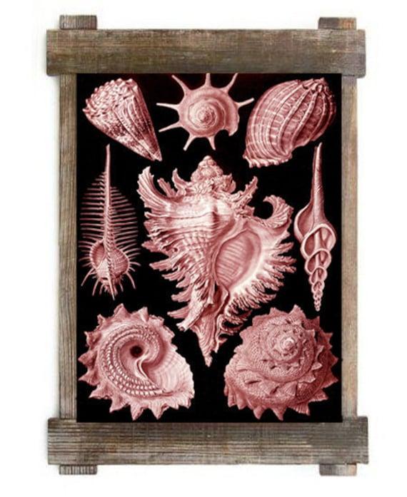 Antique Sea Shell Marine Life Nautical Digital Download Art Print Red Black