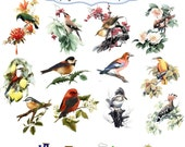 Clip Art: Birds on Branches  Png Digital Files no 059