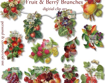 Clip Art: Fruits and Berries Branches Vintage Png  no 040