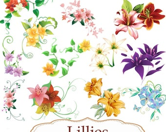 Clip Art:  Lillies   Png Digital Files no 084