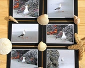 Seagulls Photo Greeting Cards, Set of 6 Different Eco-Friendly Notecards, Fine Art Photography, Wild Birds at the Beach, Nature Photography