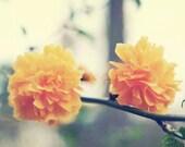 Vintage Orange Blossoms