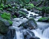 Stevens Creek Digital Photograph