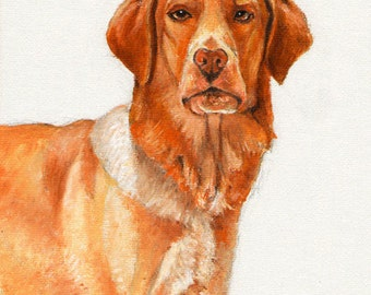 Original DOG Oil Portrait Painting HOVAWART Artwork from Artist