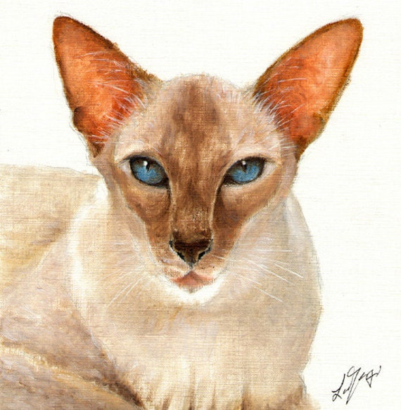 Original Oil Portrait Painting SIAMESE CAT Artwork Art from Artist