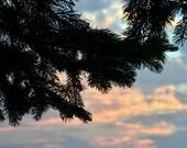 Blue Orange Sunset Photograph Pine Tree Silhouette Picture  8 X 10 Nature Photographic Print
