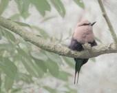 Bird Photograph, Nature Photography, Green and Gray Wall Decor, Bird Bedroom Wall Art, 11x14 Fine Art Print