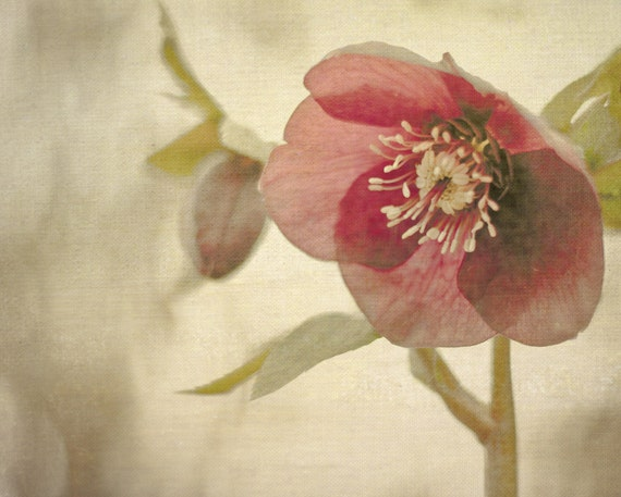 Flower Photography, Pink and Gray Photograph, Cottage Decor, Feminine Picture, Shabby Chic Bedroom Artwork, 11x14 Photo