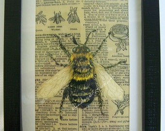 Vintage Bee Art Print Home Decor Wall Art Insect Vintage Inspired Altered Art Collage Original Drawing Natural History Black White
