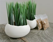 Porcelain Egg Planters, Egg Sprouts Set of 2, Wheat Grass Kit