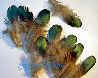 green feathers SALE 30 medium iridescent green Lady Amherst