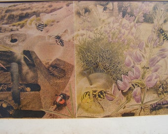 Large Panel Vintage Entomology Lithography Framed Ant Colony Bees Wasps Flys Beetles Spiders