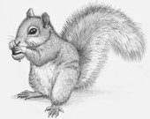 Pencil drawings of animals. I'll draw anything you want! Wild animals e.g. tiger, squirrel, owl etc. Or a pet portrait from photograph
