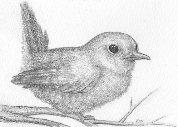 Bird Drawing Pencil Sketch Of Fledgling Bird Small