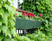 Gerber Daisies with Boston Ivy 6.6X10 Photo Fine Art Photograph Print Pink Rustic Green Flower Box
