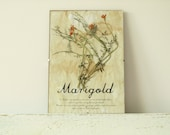 Pressed Flowers- Marigolds in Frame (1)