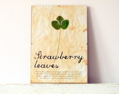 Kitchen wall decor- Dried Pressed Leaf- Strawberry leaves with explanation in Frame (1)