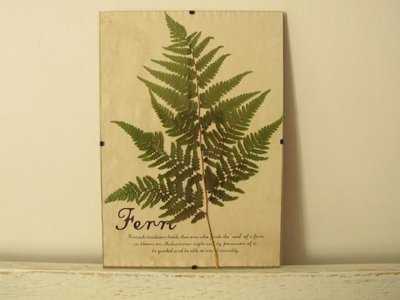 Pressed Herbs- Fern in Frame (5)