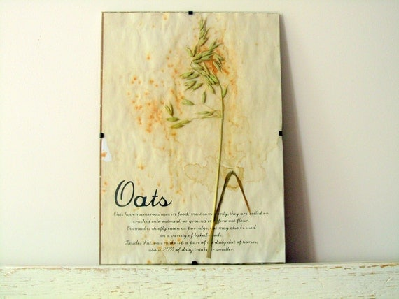 Pressed Flowers- Oats in Frame (4)