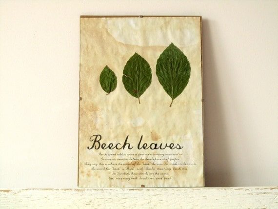 Dried Pressed Leafs- Beech Leave in Frame (2)
