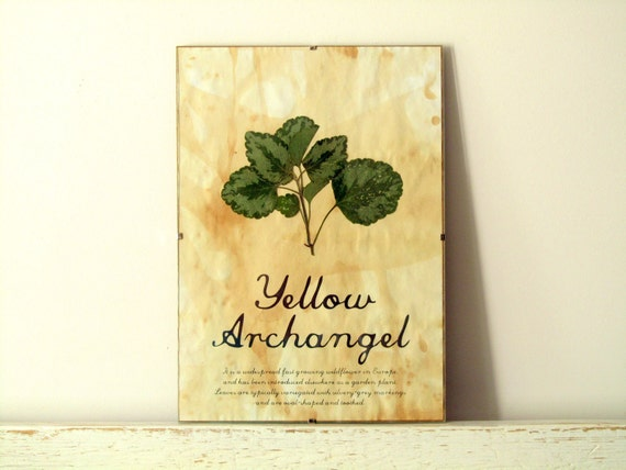 Pressed Plants- Yellow Archangel in Frame (1)