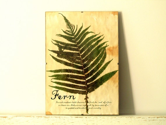 Pressed Herbs- Fern in Frame (7)