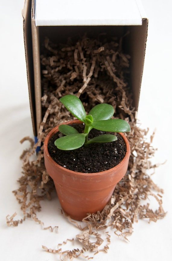 Living Family Tree - Start a branch kit comes with registered seedling.
