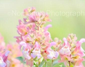 Soft pink flower print, Pink petals, Fine art photograph, Pink and green, Wedding flower photo