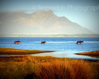 Wild horses, Landscape phototography, Mountains, lake, water, river, blue and orange, South Africa 13 x 19
