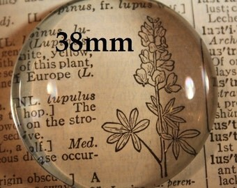12 - 38 mm Clear Extra Large Round Cabochon 1 1/2 inches for Pendant or magnet making 38mm FREE Shipping in US