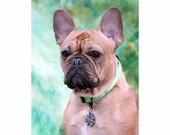 Dog ID Collar Tag Custom Pet ID Tag Four Leaf Clover