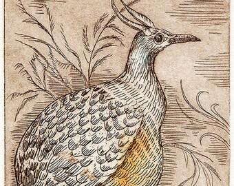 Plump bird, Zinc Plate Etching