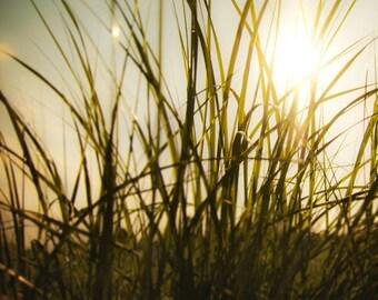 Nature photo Spring rustic rural field tall grass green sunshine sunlight sunny golden wisps of grass whimsy dreamy wall art
