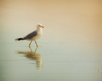 Minimalist Bird photo, Seagull, Beach decor. Pastel peach, turquoise / aqua, summer photography
