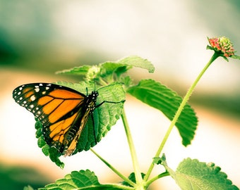Monarch print butterfly photo, spring decor summer decor, nursery decor, garden art, green and orange, art for girls