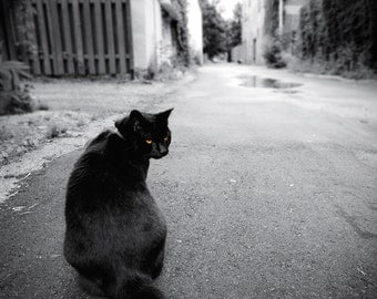 Black Cat photo, Halloween decor, cat art, cat eyes, bad luck superstition, urban black and white photography