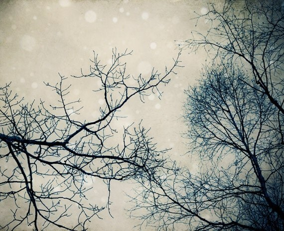 Surreal winter tree photo, magical dreamy winter forest, snowing, fantasy art, home decor