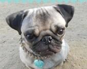 Collar - Custom Pug's tag