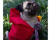 Red Riding Hood - Pug Costume for Halloween