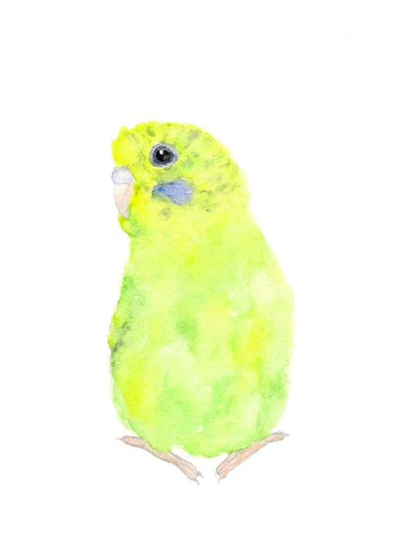 Bird painting watercolor, bird watercolor painting, watercolor bird print, print of birds, budgie print, green bird art, parakeet art, 5X7