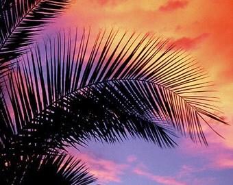 Trees, Palm Tree, Maui, HI