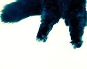 Kitty Pants - Original Fine Art Photograph - 5 x 5 - Animal Photography - Cat Photograph