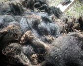 Reserved---Unwashed Shetland Sheep Wool Soft Black --Venus 3 3/4 lb